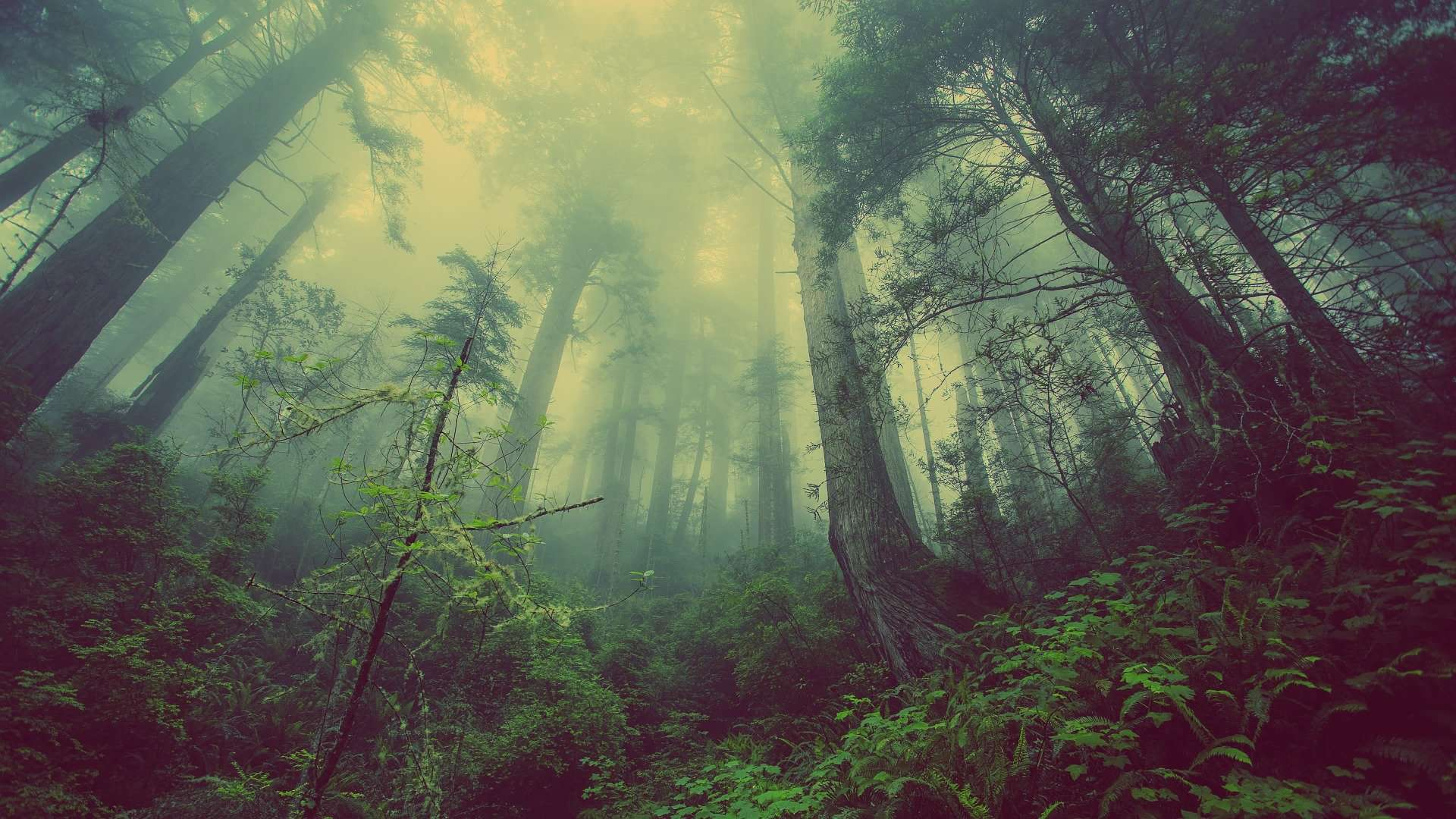 How Do You Survive In A Forest